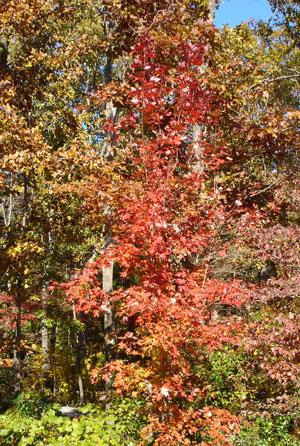 Fall-2007