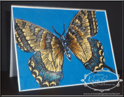 ASwallowtail-1