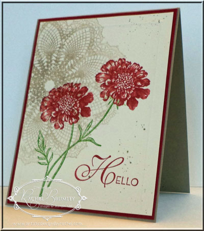 AField-Flowers-Petals-Primrose