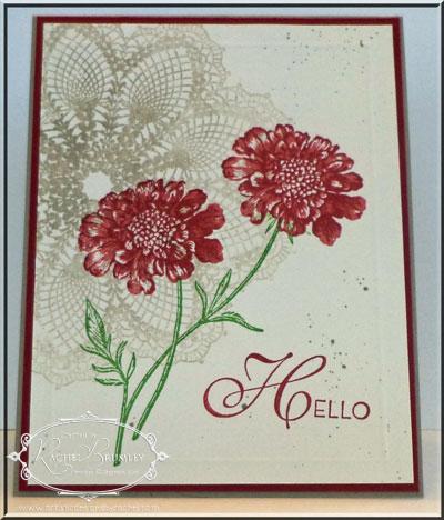 AField-Flowers-Petals-Primrose1
